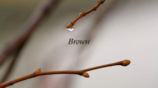 • Brown